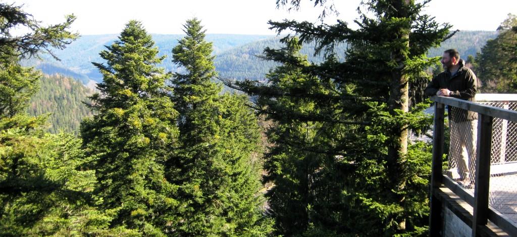 Northern Forests - Schwarzwald Bad Wildbad