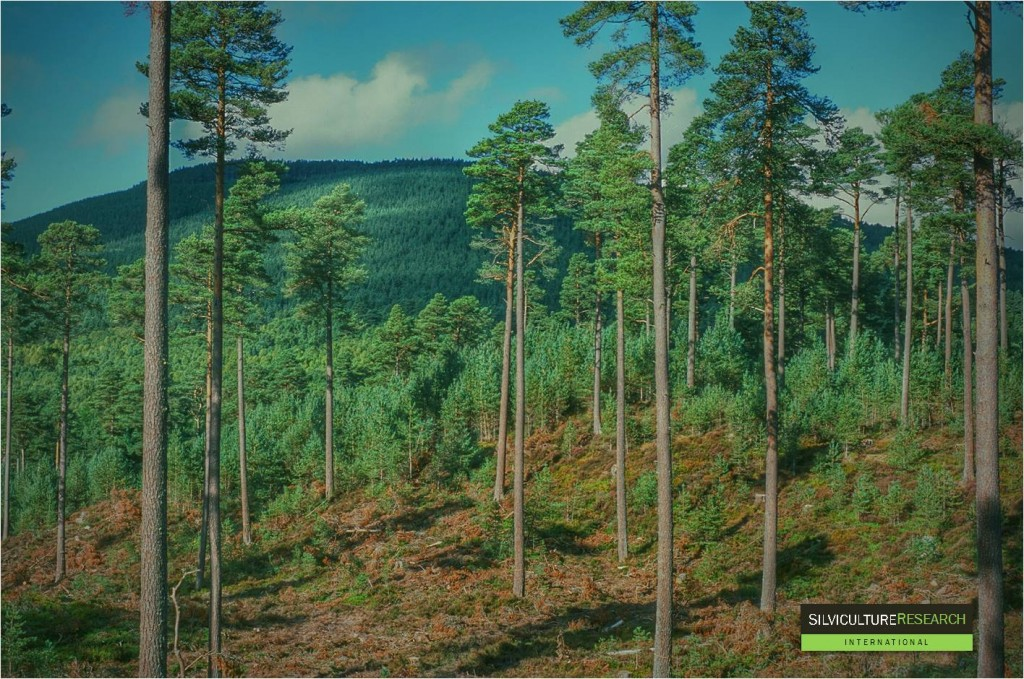 SRI Pinewoods Scotland 2014