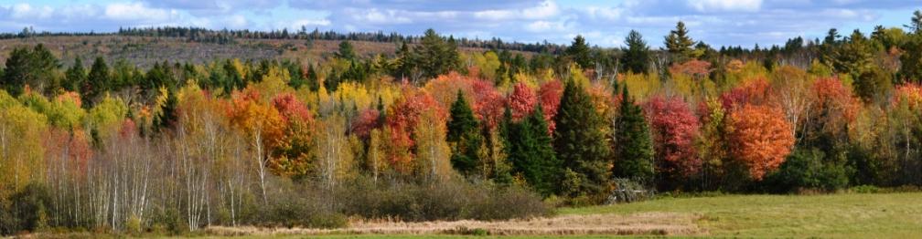 New Brunswick 2012