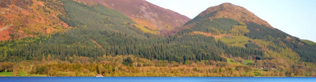 Dodd-Wood