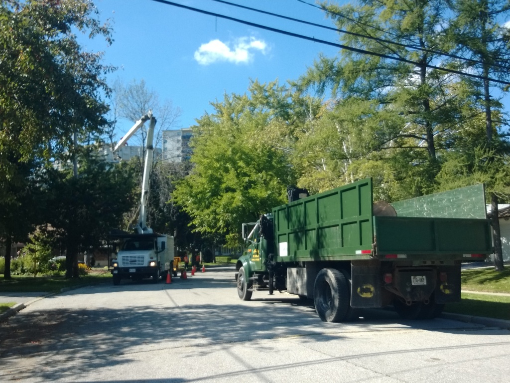 Removal of dead trees from private property, Toronto.