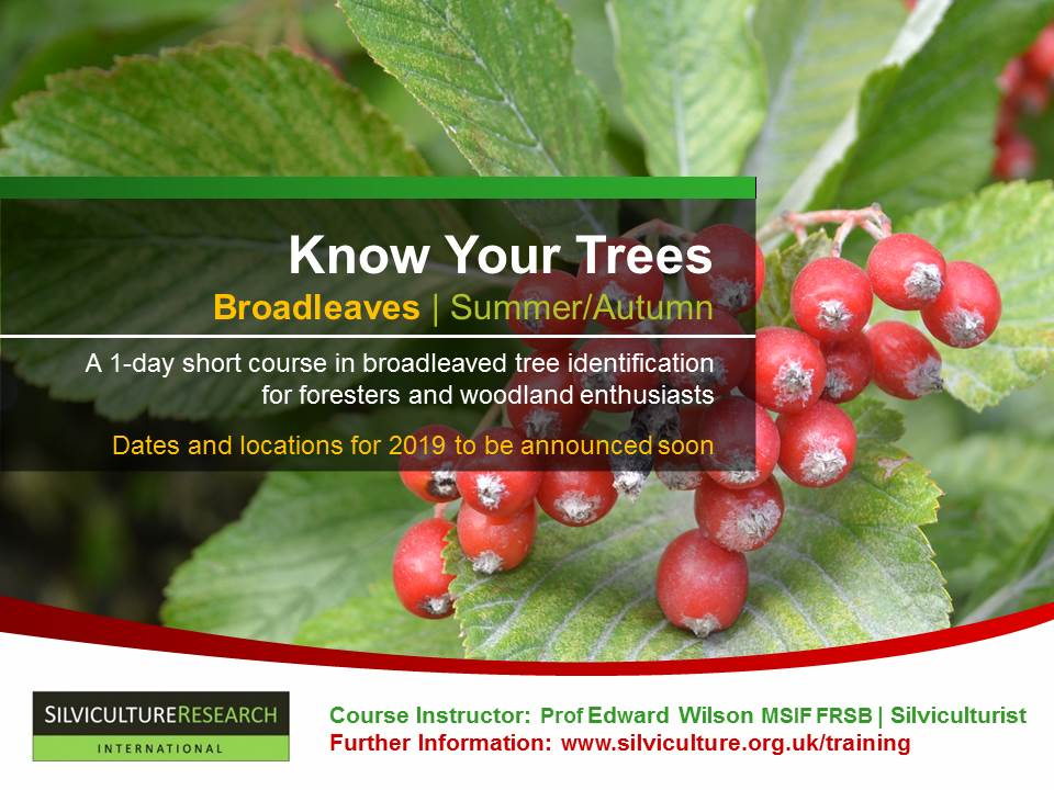 Know Your Trees | Broadleaves