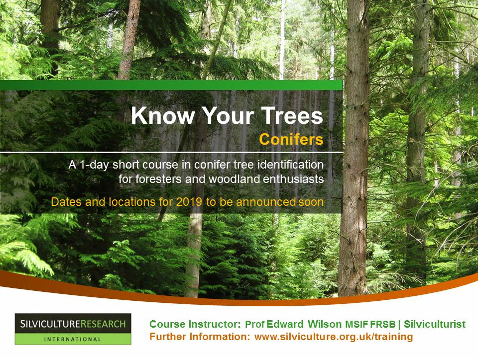 Know Your Trees | Conifers